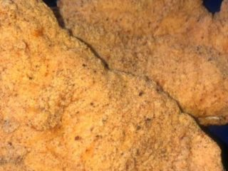Crispy southern fried chicken breasts